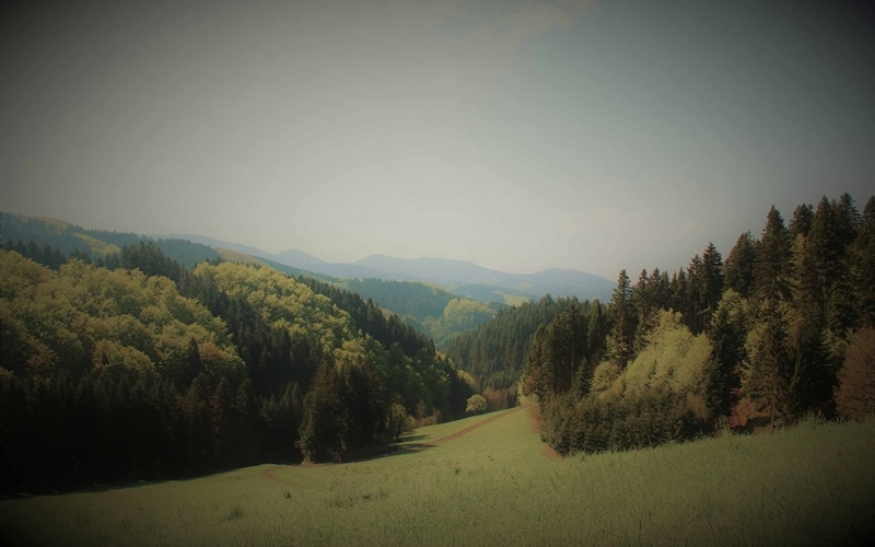 Schwarzwaldlieb